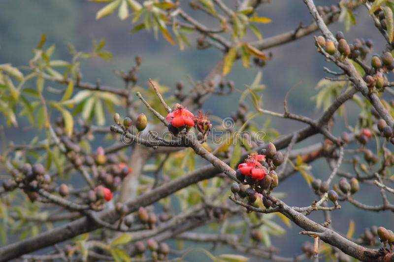 Piękny drzewny czerwony kwiat zdjęcia stock