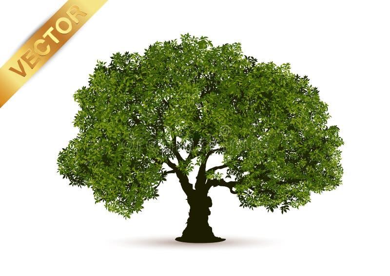 Piękny drzewny wektor na białym tle fotografia royalty free