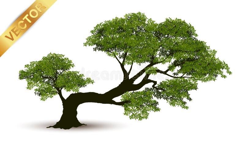 Piękny drzewny wektor na białym tle obrazy stock