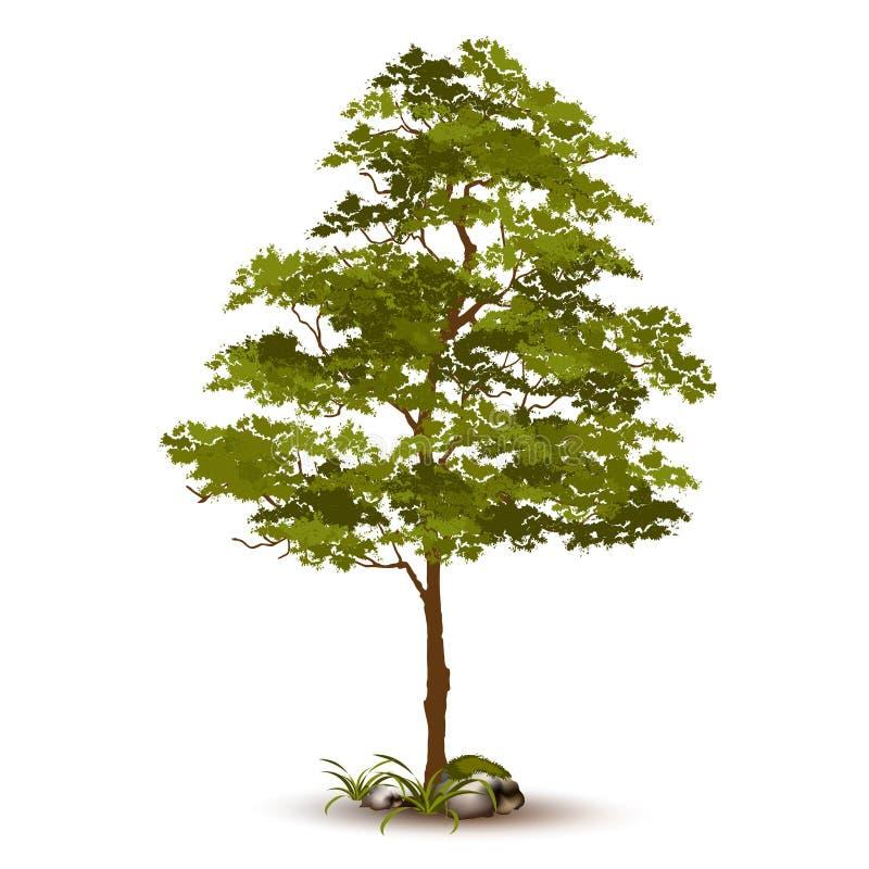 Piękny drzewny wektor na białym tle zdjęcia stock