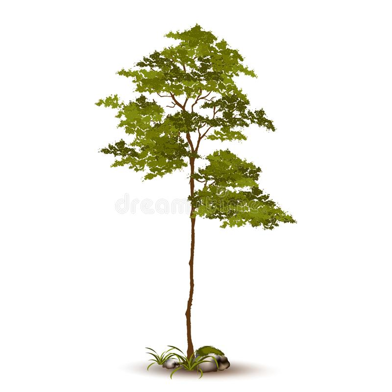 Piękny drzewny wektor na białym tle obraz royalty free