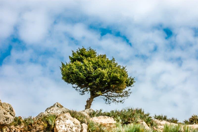 Piękny drzewo na górze fotografia royalty free