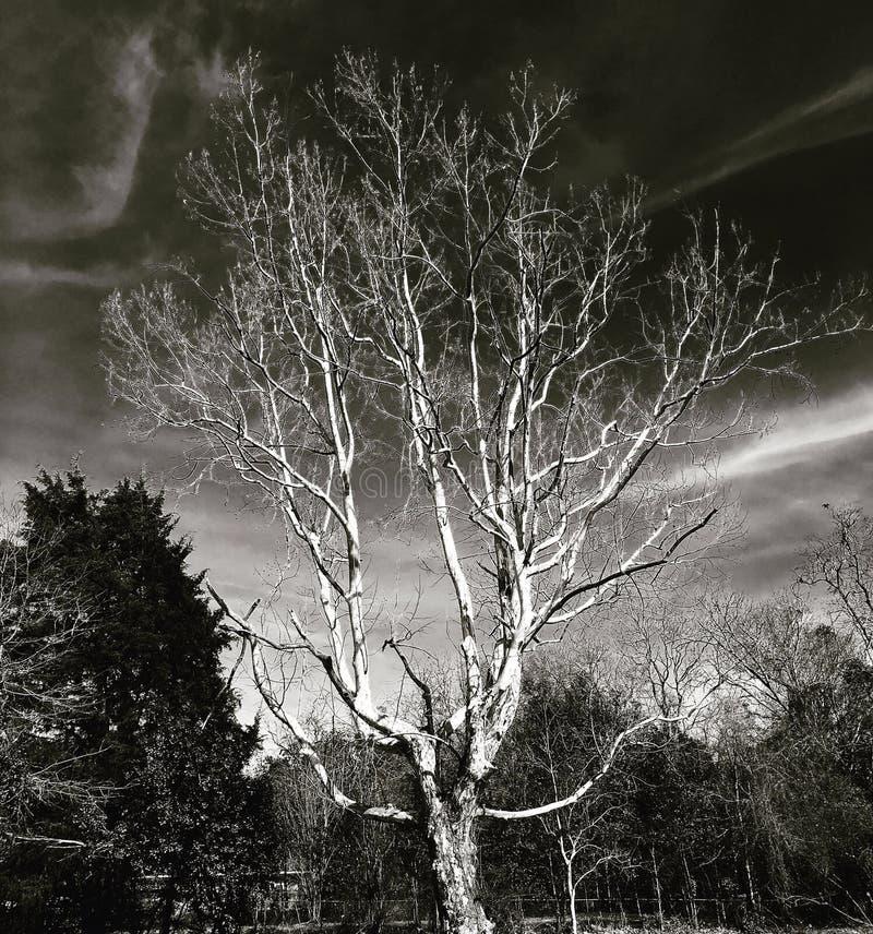 Piękny drzewo z zmrokiem obrazy stock