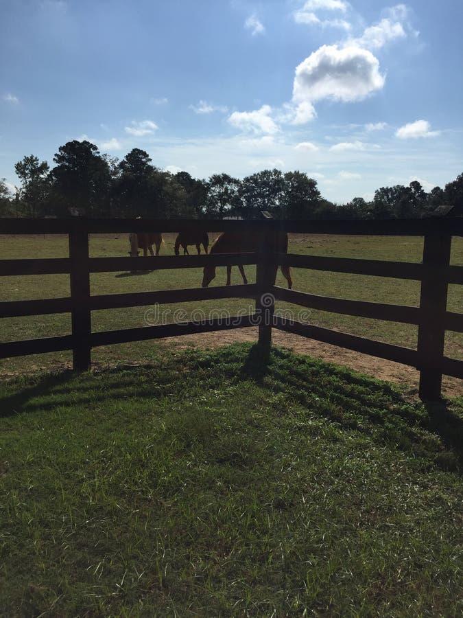 Piękny dzień przy gospodarstwem rolnym fotografia stock