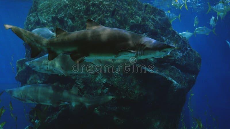 Piękny egzot widzii ryba i rekinu w akwarium scena podwodna fotografia stock