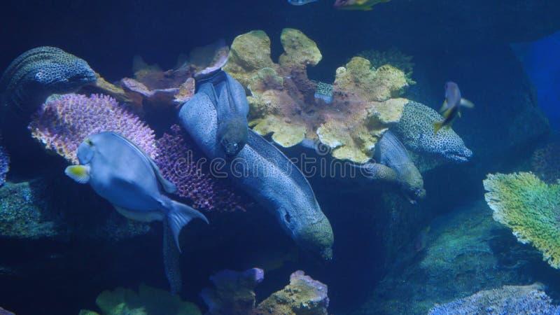 Piękny egzot widzii ryba w akwarium scena podwodna fotografia stock