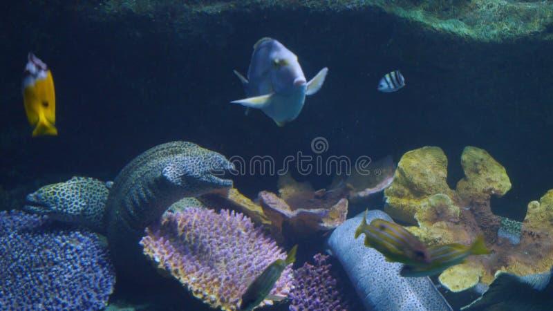 Piękny egzot widzii ryba w akwarium scena podwodna obraz stock