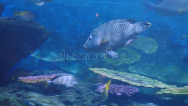 Piękny egzot widzii ryba w akwarium scena podwodna zdjęcie stock