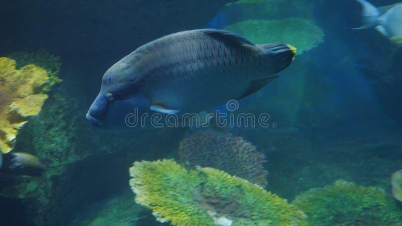 Piękny egzot widzii ryba w akwarium scena podwodna zdjęcie royalty free