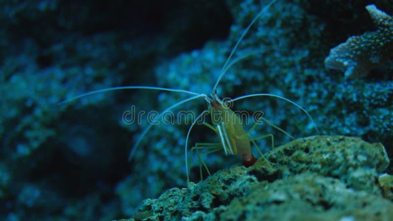 Piękny egzot widzii ryba w akwarium scena podwodna zdjęcia royalty free