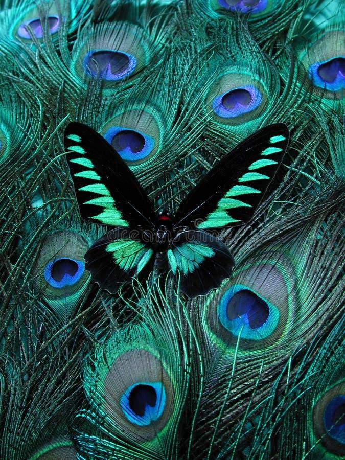 piękny egzotyczne tajemniczy obrazy stock