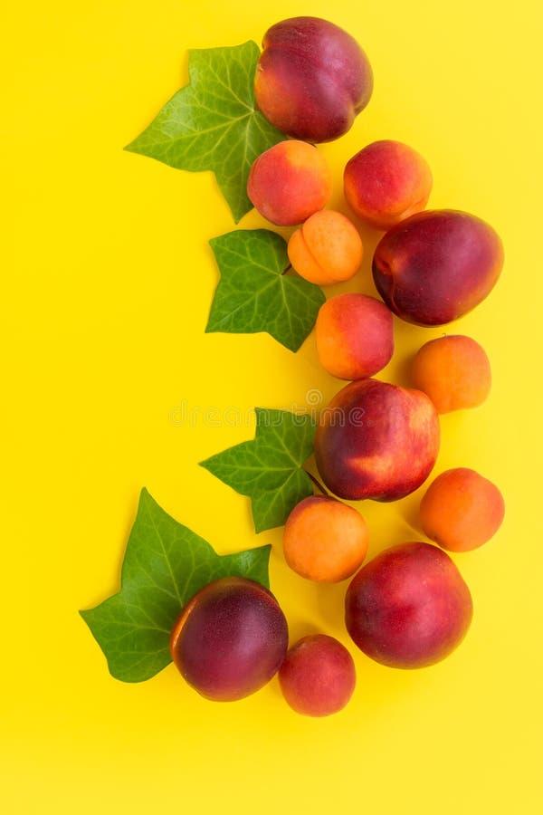 Piękny elegancki skład od dojrzałych soczystych czerwonych nektaryn i morel dekorujących z bluszcz zielenią opuszcza na pogodnym  zdjęcie stock
