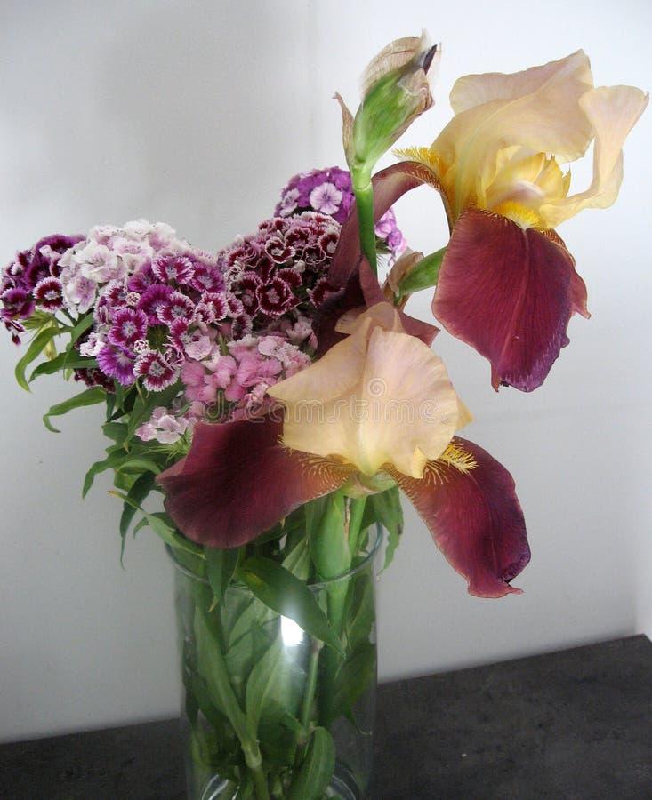 Piękny goździk kwitnie w wazie na stole Bukiet fiołek, purpury i różowy multicolor kwiat, Dekoracja dom Wallp obrazy stock