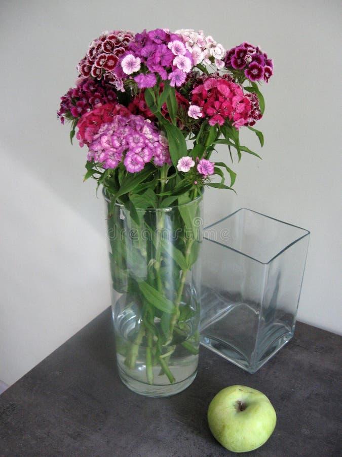 Piękny goździk kwitnie w wazie na stole Bukiet fiołek, purpury i różowy multicolor kwiat, Dekoracja dom Wallp obrazy royalty free