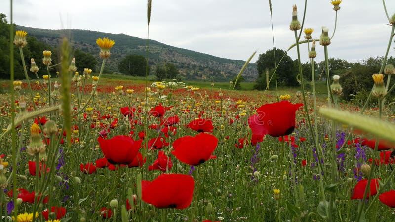 Piękny gospodarstwo rolne w indyku obraz royalty free
