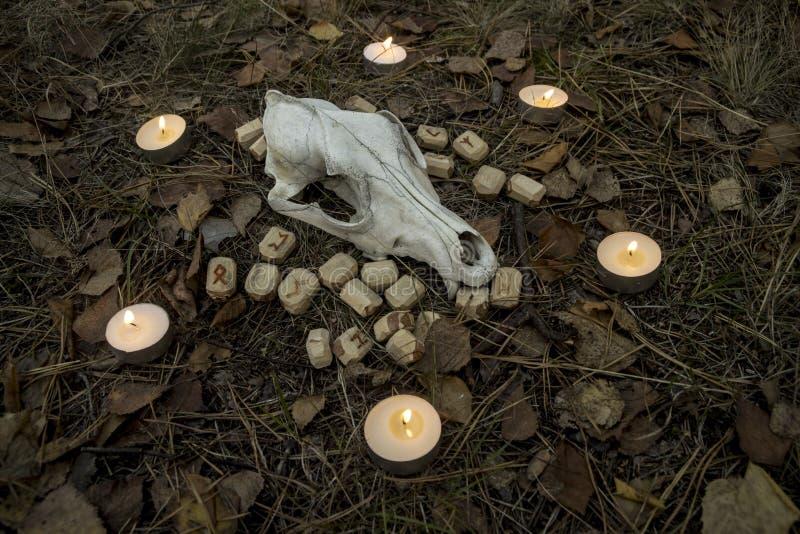 Piękny Halloween skład z runes, czaszką, tarot i świeczkami na trawie w ciemnym jesień lasu rytuale, zdjęcia royalty free
