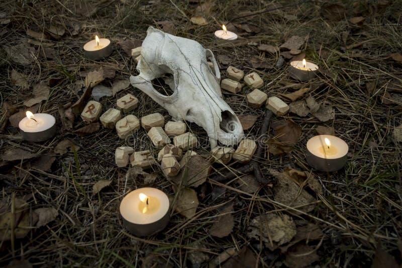 Piękny Halloween skład z runes, czaszką, tarot i świeczkami na trawie w ciemnym jesień lasu rytuale, zdjęcie royalty free