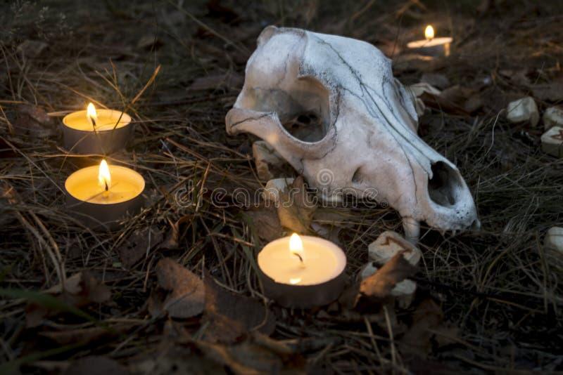 Piękny Halloween skład z runes, czaszką, tarot i świeczkami na trawie w ciemnym jesień lasu rytuale, obrazy royalty free