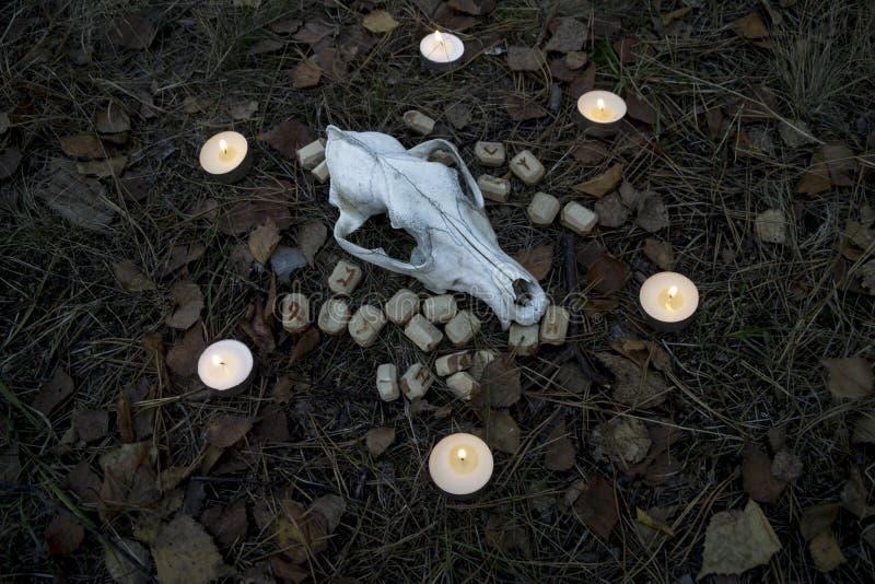 Piękny Halloween skład z runes, czaszką, tarot i świeczkami na trawie w ciemnym jesień lasu rytuale, fotografia royalty free