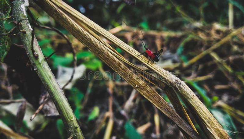 piękny insekt obrazy stock