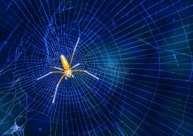 Piękny insekta zabójcy pająk w Malaysia obraz royalty free