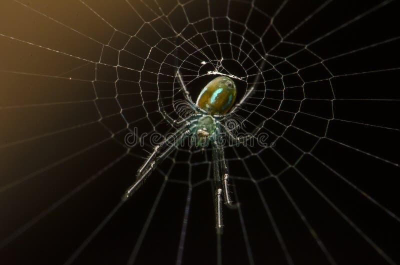 Piękny insekta zabójcy pająka łasowanie w Malaysia obraz stock
