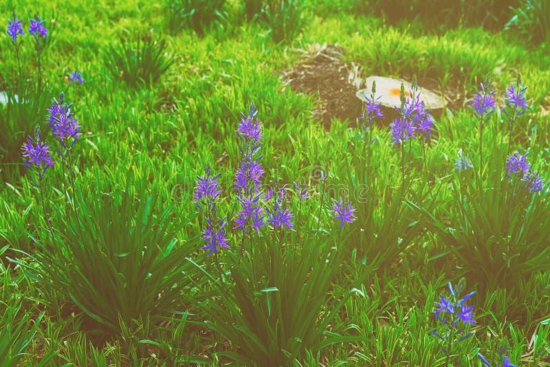 Piękny jaskrawy błękitów kwiatów park zdjęcia stock