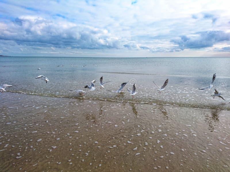 Piękny jaskrawy błękitny seascape: niebo, chmury, woda, fale, piasek, wiatr obrazy royalty free
