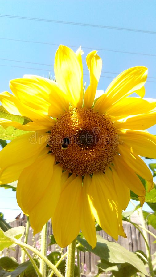 Piękny jaskrawy kwiat z menchia płatkami zdjęcia royalty free