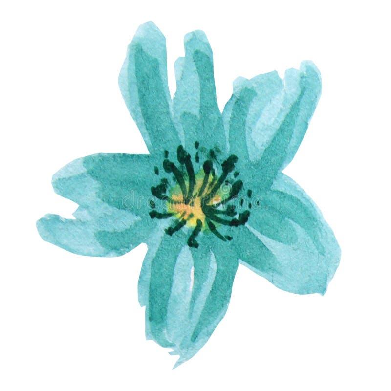 Piękny jaskrawy turkusowy akwarela kwiat pojedynczy bia?e t?o ilustracji