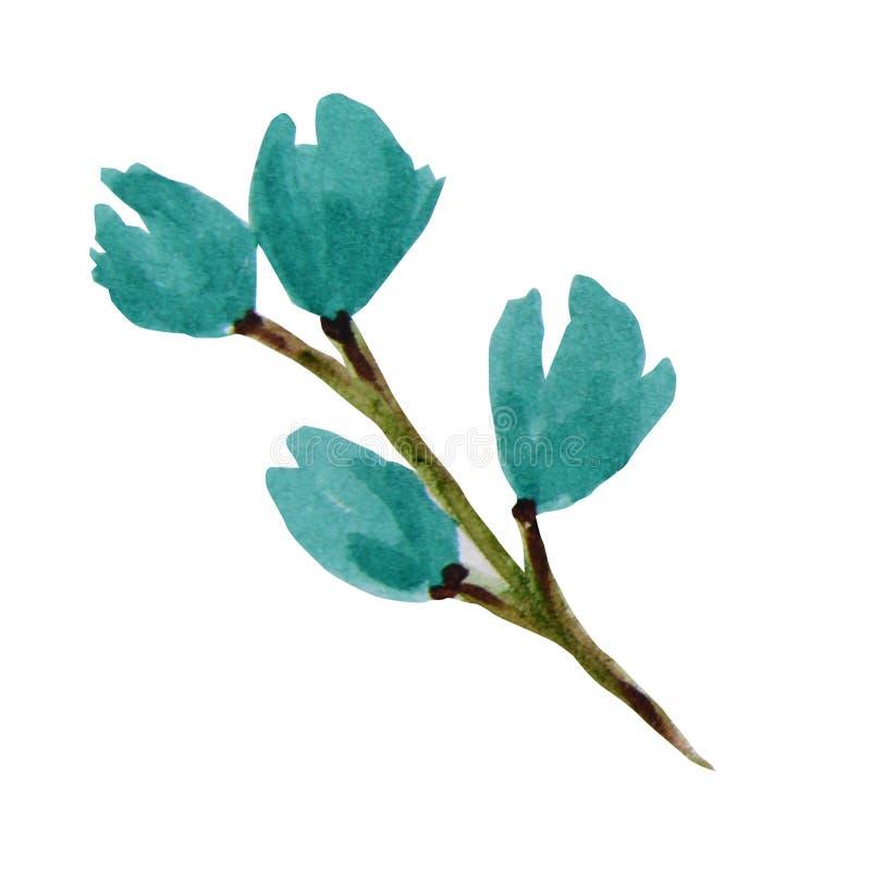 Piękny jaskrawy turkusowy akwarela kwiat pojedynczy bia?e t?o royalty ilustracja