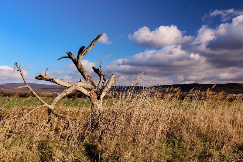 Piękny jesień krajobraz - suchy drzewo w chmurnym niebie i polach fotografia royalty free
