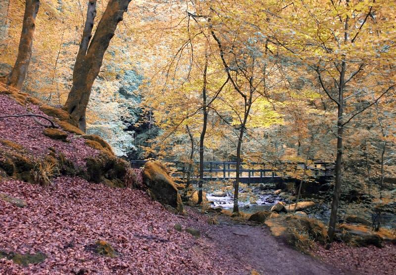 Piękny jesień las z rzecznym i drewnianym mostem fotografia stock