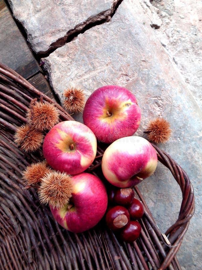Piękny jesień skład, jabłka i kasztany, zdjęcie royalty free