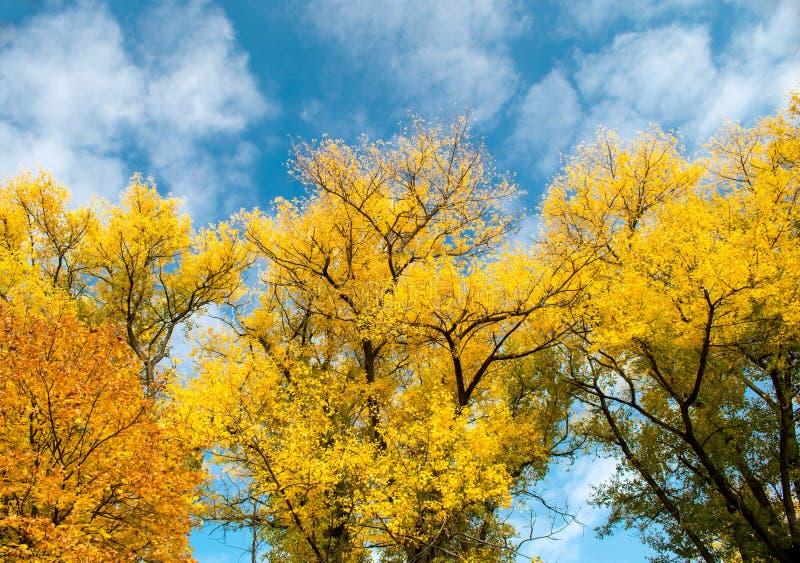 Piękny jesień stan natura obrazy stock