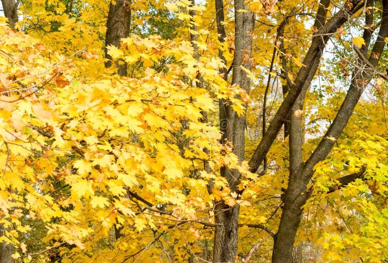 Piękny jesień stan natura obraz royalty free