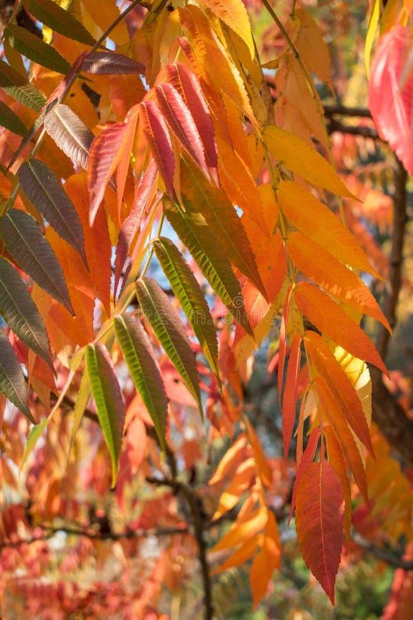 Piękny jesień stan natura zdjęcia stock