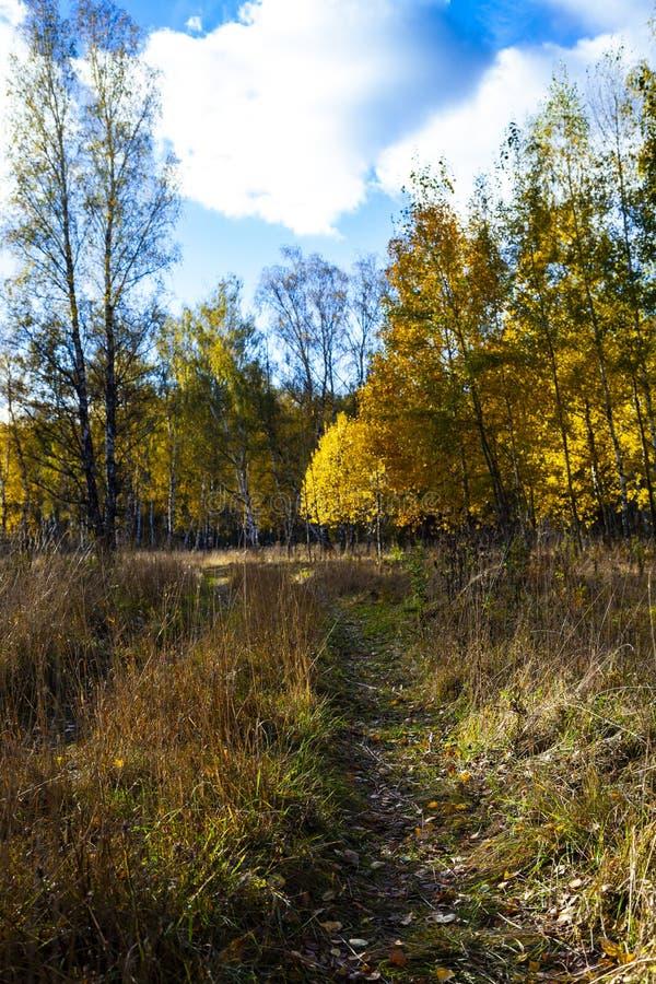 Piękny jesieni brzozy gaj zdjęcie stock