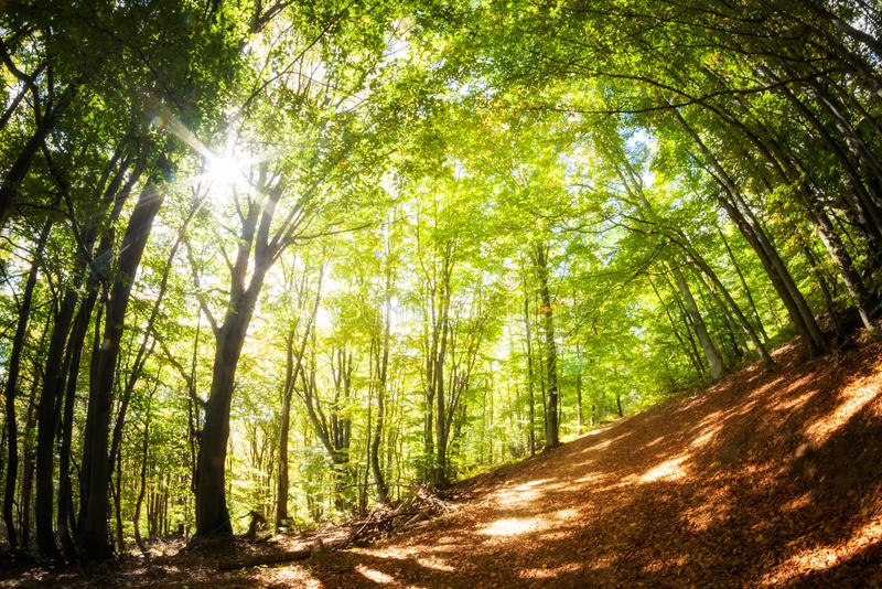 Piękny jesieni drewien krajobraz zdjęcie royalty free