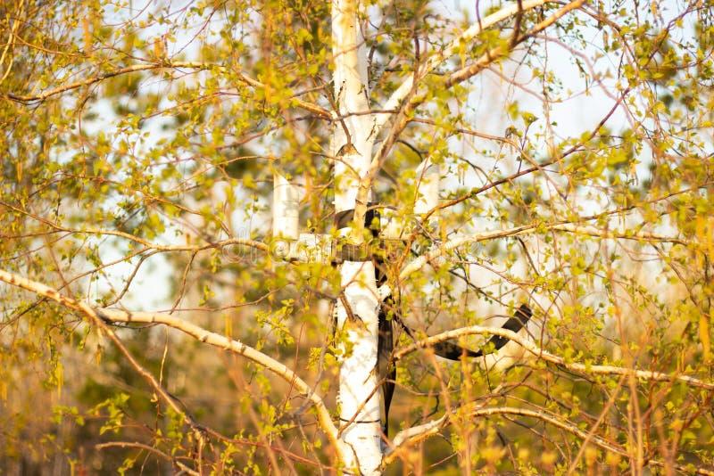 Piękny jesieni drzewo przy dniem fotografia royalty free