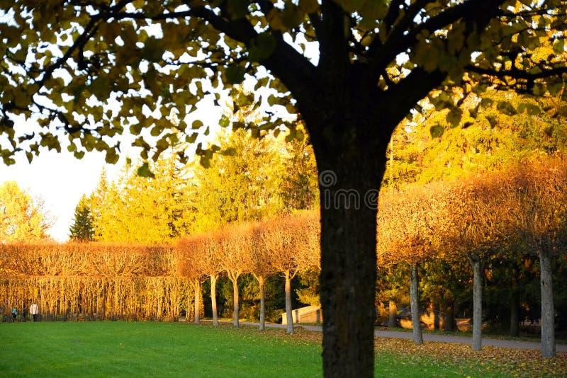 piękny jesienny park jesień liść drzewa fotografia stock