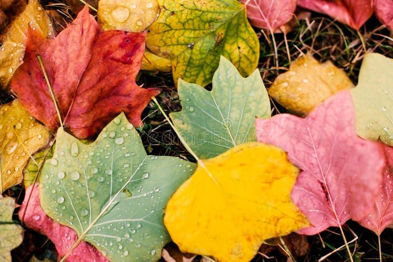 piękny jesienny park Tekstura kolor żółty i czerwień opuszcza jako autum zdjęcia royalty free