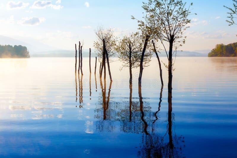 Piękny jeziorny widok w ranek mgle z tajemniczymi górami i drzewami jako resztki gramocząsteczka w złocie - błękit tonuje fotografia stock