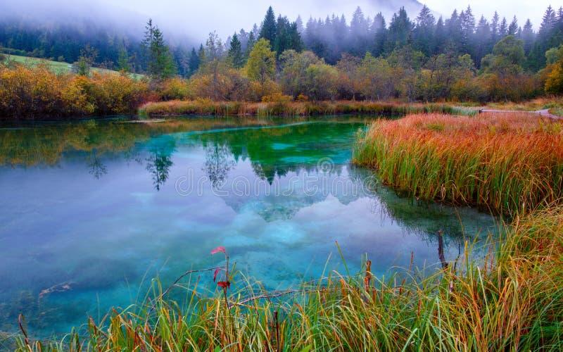 Piękny jeziorny Zelenci w jesieni barwi w tle Martuljek górę blisko Kranjska Gora przy Triglav obywatelem zdjęcie stock