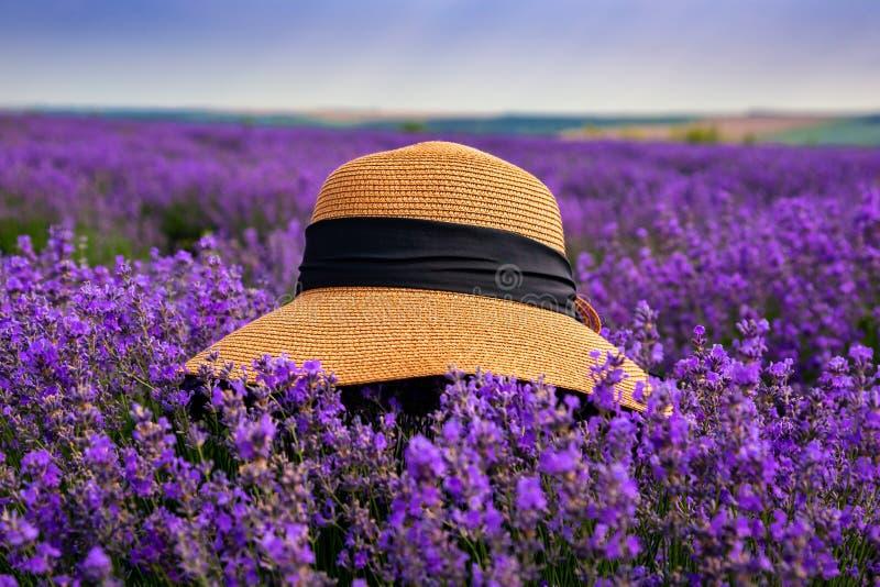 Piękny kapelusz na lawendowym polu na słonecznym dniu zdjęcie stock