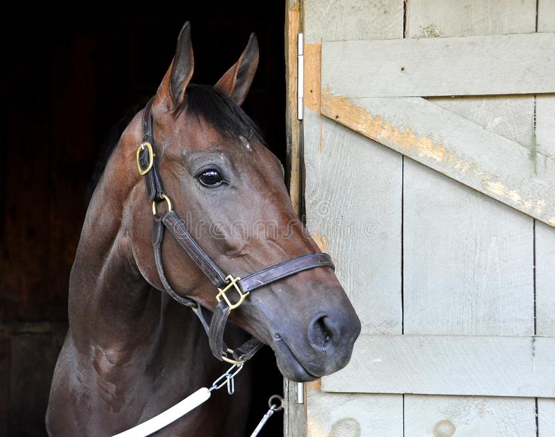 piękny koń obrazy stock