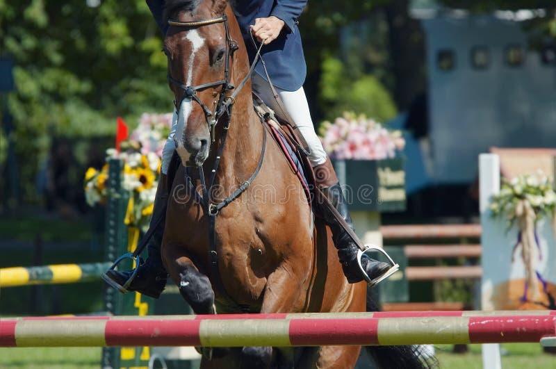 piękny koń skaczący obrazy royalty free