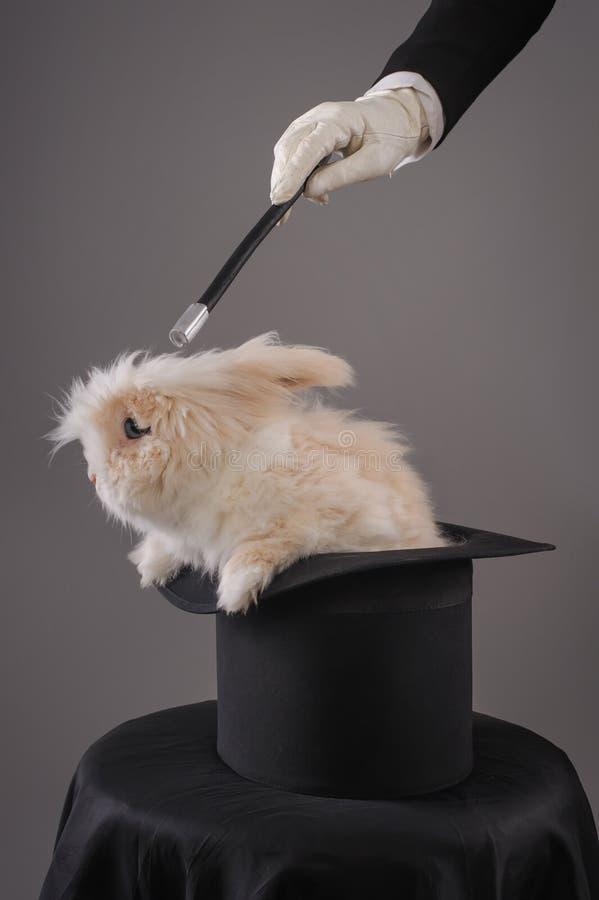 Piękny kobieta magik z królikiem w kapeluszu obrazy stock