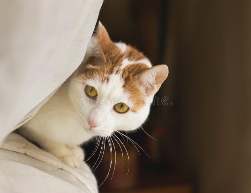 Piękny koci kot w domu obrazy stock