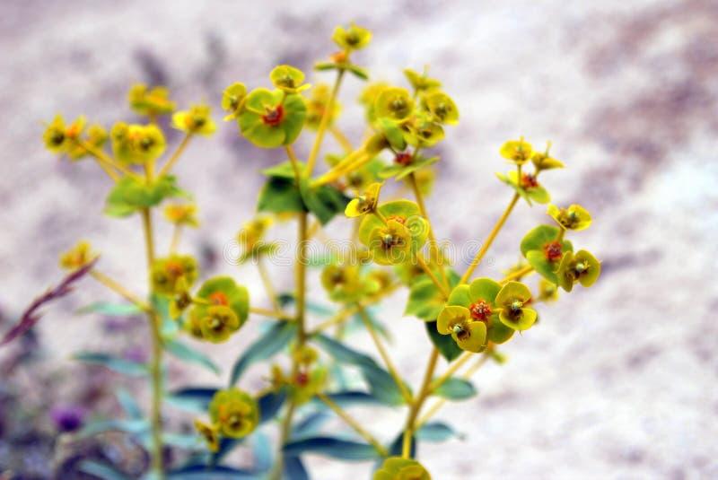 Piękny kolor żółty kwitnie blisko góry zdjęcie stock